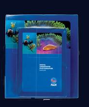 padi digital underwater photography diver course rh scubadiveit com padi digital underwater photographer manual padi underwater photography manual